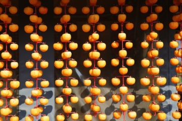 Persimmons hanging to dry